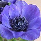 Purple flower by Lorna Taylor