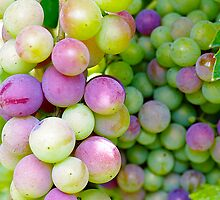 In my garden: Grapes 2 by Giuseppe Ridinò
