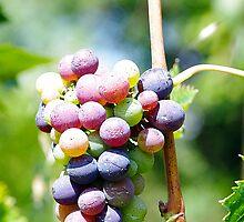 In my garden: Grapes 4 by Giuseppe Ridinò