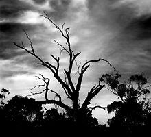 Horsham Tree ... by Erin Davis