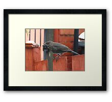Looking for food Framed Print