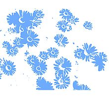 Daisies (white & blue) Photographic Print