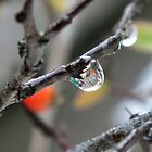 Clear water drop by Lorna Taylor