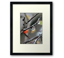 Clear water drop Framed Print