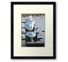 In a row.. Framed Print