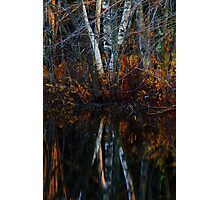 Birch Reflections Photographic Print