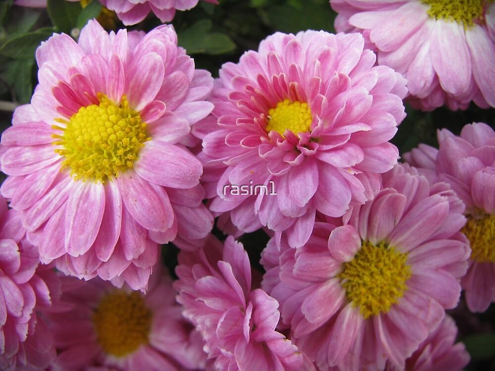 Flowers by rasim1