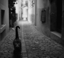 Zurich, Switzerland - stray cat by Michal Tokarczuk