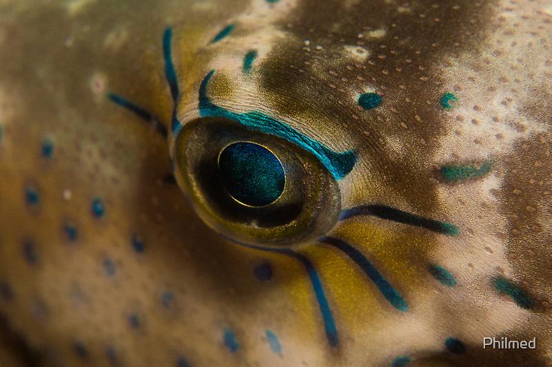 Beautiful Eye by Philmed