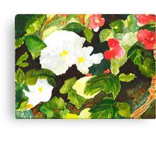 Begonia Basket Canvas Print