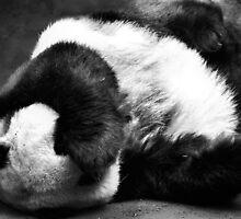 Even Pandas Have Bad Days by Carrie Bonham