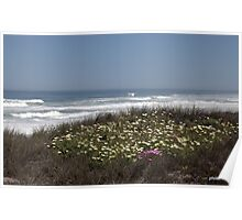 West Coast Flowers, Jakkalsfontein Poster