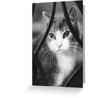 Mittens ~ Greeting Card