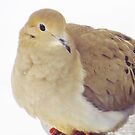 Unassuming Dove by lorilee