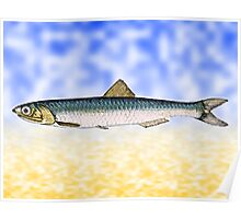 Anchovy Swimming Poster
