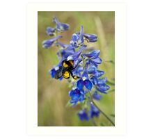 Bumble Bee On Larkspur Art Print