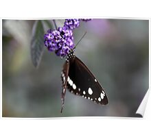 Hunter Valley Butterfly ~ 2 Poster