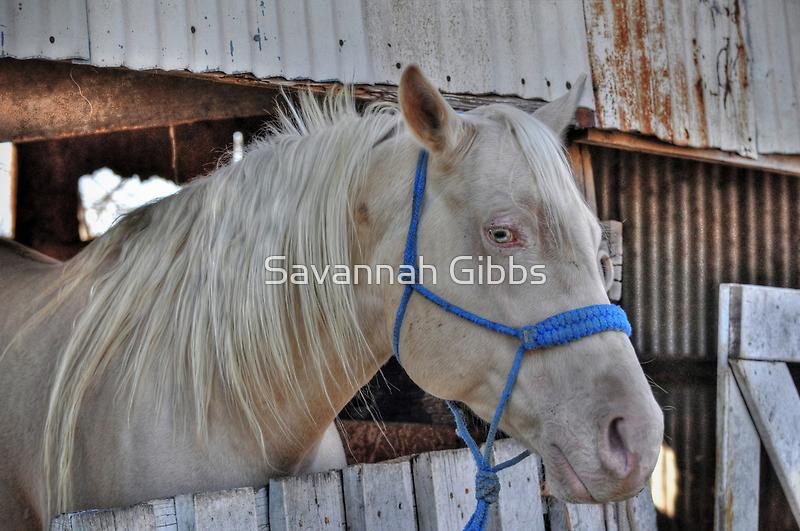 Horse by Savannah Gibbs