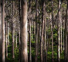 Forest by Mieke Boynton