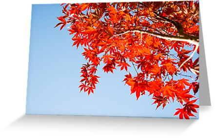 Red autumn leaves against blue sky. by brians101