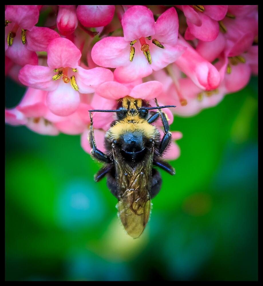 Bumble Bee by Javier Pantoja