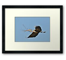 Collecting Nest Materials Framed Print