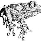 Beautiful perching frog by Rebecca Koller