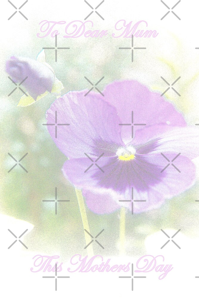 Mothers Day Pansies by Catherine Hamilton-Veal  ©