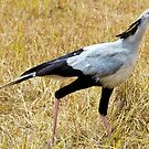 Secretary Bird by Pravine Chester