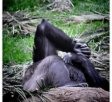Where Sleeping Gorillas Lie... by LCR  Photography