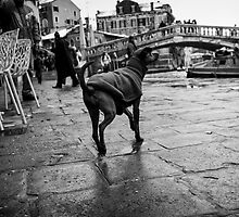 Venezia 4 by Lidia D'Opera