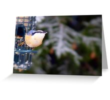Red Breasted Nuthatch... Greeting Card