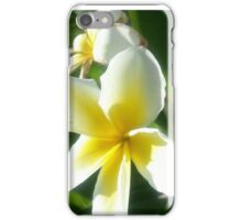 Plumeria - white and yellow iPhone Case/Skin
