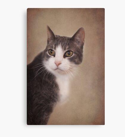 Pretty Kitty ~ Canvas Print
