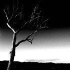 Summer Hill Tree - Night ... by Erin Davis