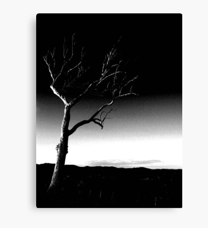 Summer Hill Tree - Night ... Canvas Print