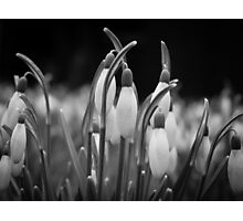 New beginnings and hope Photographic Print