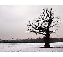Winter Oak in Morden Park, London Photographic Print