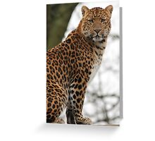 North Chinese Leopard Greeting Card
