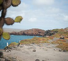 island landscape and opuntia cactus by brians101