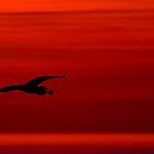 blue heron at sunset by Jim Cumming