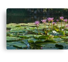 Classic lily pond image. Canvas Print