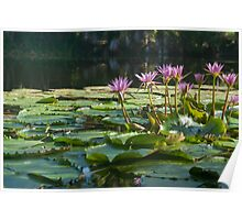 Classic lily pond image. Poster