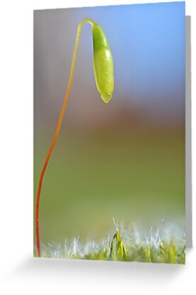 Seed pod by relayer51