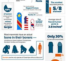 Interesting Penis Facts Infographic – Learn All About Penis Size by bigerpenis