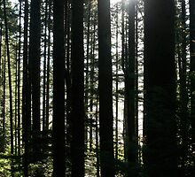 Trees and Sunburst by Brittany Brassell
