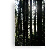 Trees and Sunburst Canvas Print