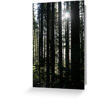 Trees and Sunburst Greeting Card