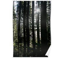 Trees and Sunburst Poster