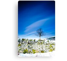 Tree and mossy wall in the snow, Southern Upland Way, Scottish Borders Canvas Print